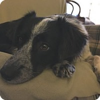 Adopt A Pet :: Duchess - Avon, NY
