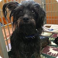 Adopt A Pet :: Emma - Plainville, CT