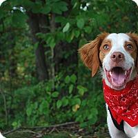 Adopt A Pet :: Bubba - New Castle, PA