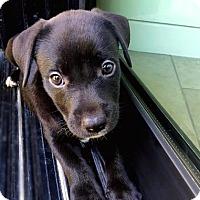 Adopt A Pet :: Grizz - Austin, TX