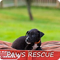 Adopt A Pet :: Diane - Forest Hill, MD