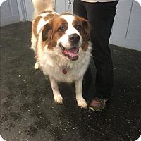 Adopt A Pet :: Freckles - East McKeesport, PA