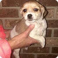 Adopt A Pet :: Sassy - columbiana, OH