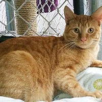 Adopt A Pet :: Sweet Potatoe - Freeport, NY