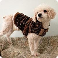 Adopt A Pet :: Frankee - Princeton, MN