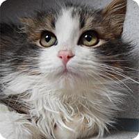 Adopt A Pet :: Ethan - Waupaca, WI