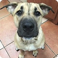 Adopt A Pet :: Bailey - Miami, FL