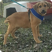 Adopt A Pet :: FRISCO - Cranston, RI