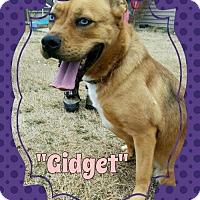 Pit Bull Terrier/Australian Cattle Dog Mix Dog for adoption in Seaford, Delaware - Gidget