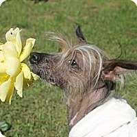 Adopt A Pet :: Mia - Gilford, NH