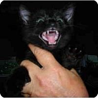 Adopt A Pet :: BooBoo - Riverside, RI