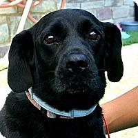 Adopt A Pet :: Thor - white settlment, TX