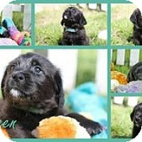 Adopt A Pet :: Colleen - Austin, TX