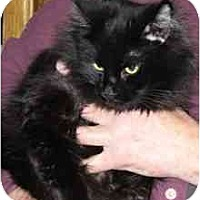 Adopt A Pet :: Pocus - Fayette, MO