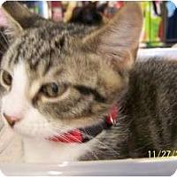 Adopt A Pet :: Roger - Riverside, RI