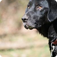 Adopt A Pet :: Dusty - Salem, MA