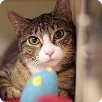 Adopt A Pet :: Sacagawea - Chicago, IL