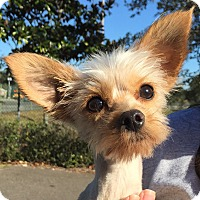 Adopt A Pet :: Cooper - Orlando, FL