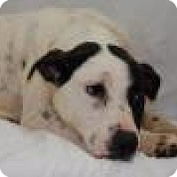 Pointer/Terrier (Unknown Type, Medium) Mix Dog for adoption in Jackson, Mississippi - Grace