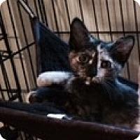 Adopt A Pet :: KATNISS aka LUCY - Hamilton, NJ