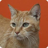 Adopt A Pet :: Retro - Aiken, SC