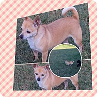 Adopt A Pet :: Rosemary - San Antonio, TX