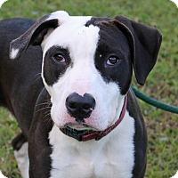 Adopt A Pet :: Moxi - Newport, NC