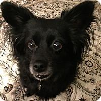 Adopt A Pet :: Jackson the Cuddler - Columbus, OH