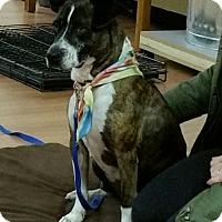 Adopt A Pet :: Wilson - Philadelphia, PA