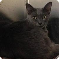 Adopt A Pet :: Steely - Gainesville, FL