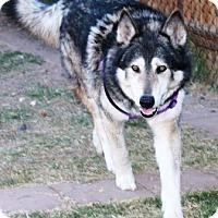 Adopt A Pet :: Takaani - Gilbert, AZ