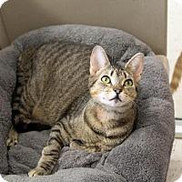 Adopt A Pet :: Eden - Columbus, OH