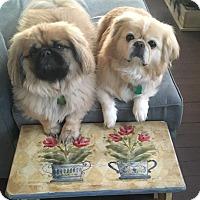 Adopt A Pet :: Milo and Ollie - Portland, ME