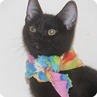 Adopt A Pet :: Piper - Houston, TX