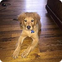Adopt A Pet :: Tillie Mae - Houston, TX