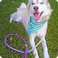 Adopt A Pet :: Alue - Sugar Land, TX