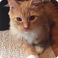 Adopt A Pet :: Bridgette - Toms River, NJ