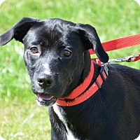 Adopt A Pet :: Lexi - DuQuoin, IL