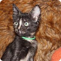 Adopt A Pet :: Thanksgiving: Mayflower - Palo Alto, CA