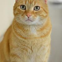 Adopt A Pet :: Tango161895 - Atlanta, GA