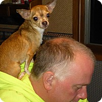 Chihuahua Mix Dog for adoption in Wyanet, Illinois - Rosie