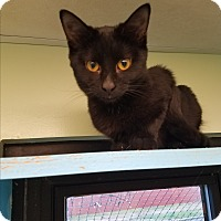 Adopt A Pet :: Jim - Indianapolis, IN