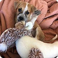 Adopt A Pet :: Chloe!! - New York, NY