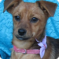 Adopt A Pet :: Nellie Voss - Cuba, NY