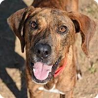 Adopt A Pet :: Finn - Athens, GA