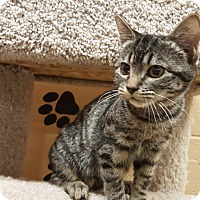 Adopt A Pet :: Shylo - Smithfield, NC