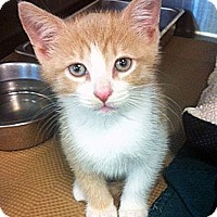 Adopt A Pet :: James - Secaucus, NJ