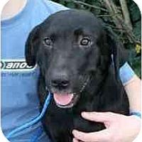 Adopt A Pet :: Darla-UPDATE 3/5 - kennebunkport, ME