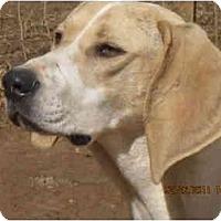 Adopt A Pet :: Duchess - Bakersville, NC