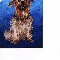 Adopt A Pet :: Alli - Cleveland, OH